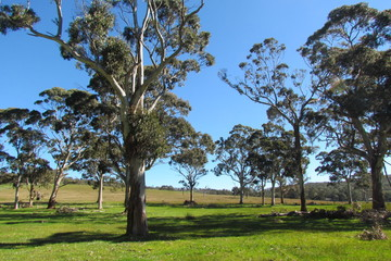 Recently Sold 398 Macclesfield Road, MACCLESFIELD, 5153, South Australia