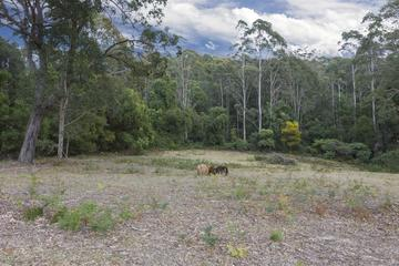 Recently Sold Lot 2 Grandfathers Gully Road, MALUA BAY, 2536, New South Wales