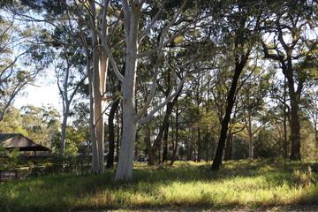 Recently Sold 15 BROLGA STREET, MACLEAY ISLAND, 4184, Queensland