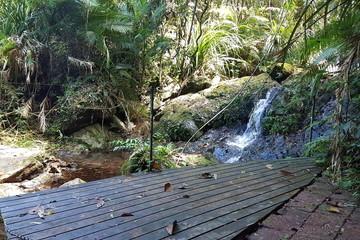 Recently Sold 95 Ironbark Road, DAINTREE, 4873, Queensland
