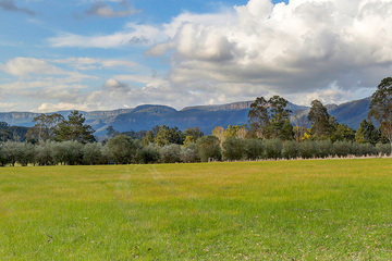 Recently Sold KANGAROO VALLEY