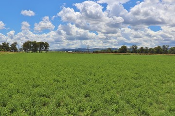 Recently Sold 0 Mt Lindesay Highway, TAMROOKUM, 4285, Queensland