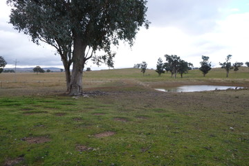 Recently Sold 84 Cultowa Lane, CANOWINDRA, 2804, New South Wales