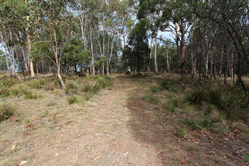 Recently Sold Lot 14, 1238 Sunny Corner Road, SUNNY CORNER, 2795, New South Wales