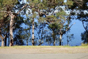 Recently Sold 39 Beach Rd., WANGI WANGI, 2267, New South Wales