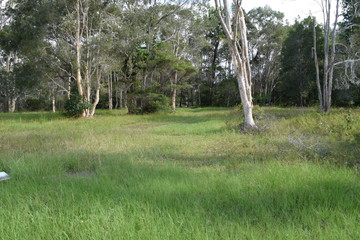 Recently Sold 6 Hawk Ct, COOLOOLA COVE, 4580, Queensland