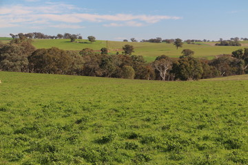 Recently Listed 251 Rhodes Road, YOUNG, 2594, New South Wales