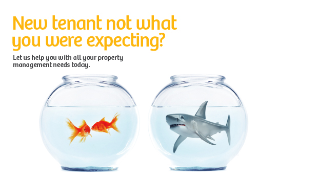 Property Management Shark & Fish Photo