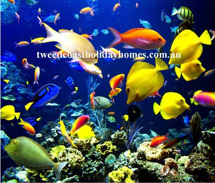 Holiday Rental (Fish Image)