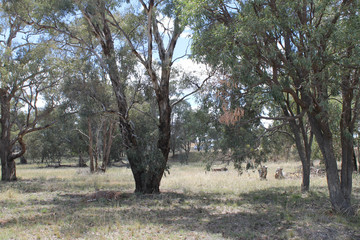 Recently Sold 111 ADAMS LEAD ROAD, GULGONG, 2852, New South Wales