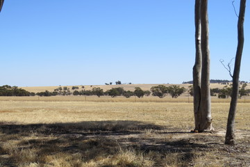 Recently Sold Lot 22 PINGELLY HEIGHTS, PINGELLY, 6308, Western Australia