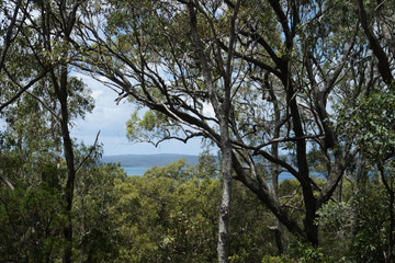 Recently Sold 11 Beelong Street, MACLEAY ISLAND, 4184, Queensland