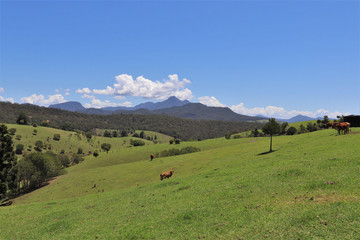 Recently Listed 189 Snake Gully Road, PALEN CREEK, 4287, Queensland