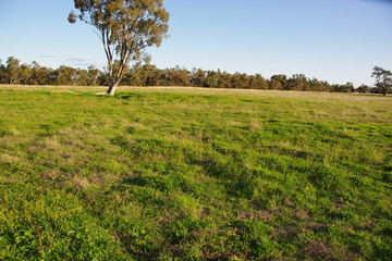 Recently Sold 5L Gilgandra Road, Brocklehurst, 2830, New South Wales