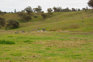 Recently Sold Lot 248 Wallaroi, Stuart Town, 2820, New South Wales