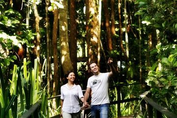 Recently Sold 330 Cape Tribulation Road, Cow Bay, Daintree, 4873, Queensland